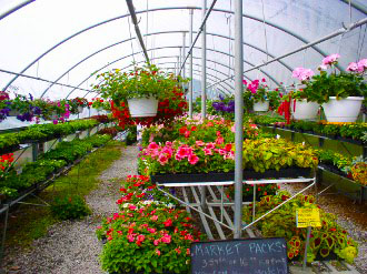 eldersburg maryland nursery