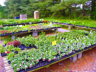 eldersburg maryland plants flowers
